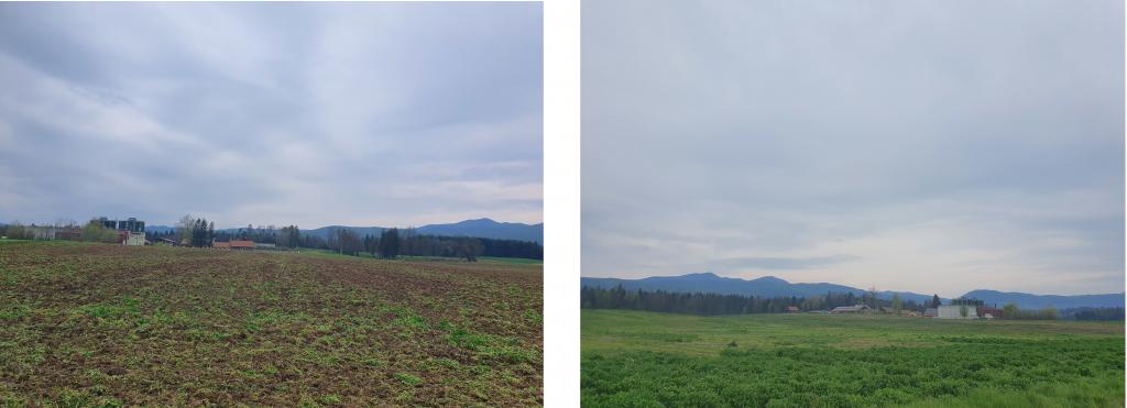 Smrdljive njive na obrobju Črnomlja, kjer se ob Petrolovi bioplinarni in zasebni prašičji farmi razprostira tudi priljubljena sprehajalna pot.