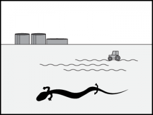 Nevladniki: Zoperstavljanje uničevanju habitata črne človeške ribice